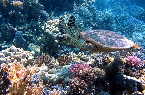 keanekaragaman hayati laut