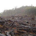 penurunan hutan