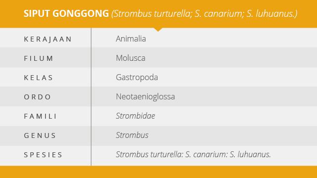 siput gonggong