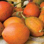 buah tepurang