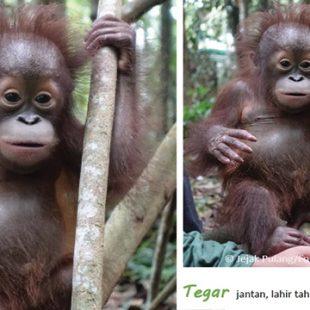 orangutan rescue center