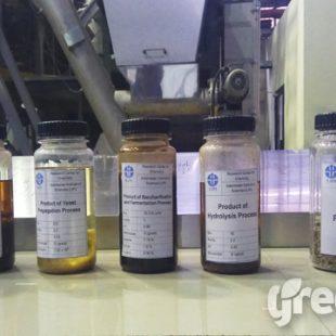 palm oil waste