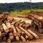42 meter kubik kayu