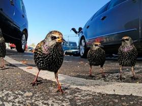 Ide_British_Wildlife_Photography_Awards_Menangkap_Keindahan_Alam_Liar_Inggris_3