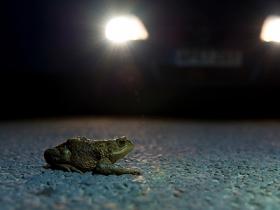 Ide_British_Wildlife_Photography_Awards_Menangkap_Keindahan_Alam_Liar_Inggris_4