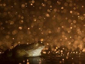 Ide_British_Wildlife_Photography_Awards_Menangkap_Keindahan_Alam_Liar_Inggris_6