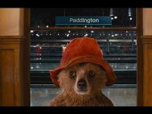 Review_Movie_Paddington_Ketika_Beruang_Menjadi_Bagian_Dari_Keluarga_04