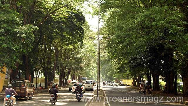 Lindungi Pohon Pelindung
