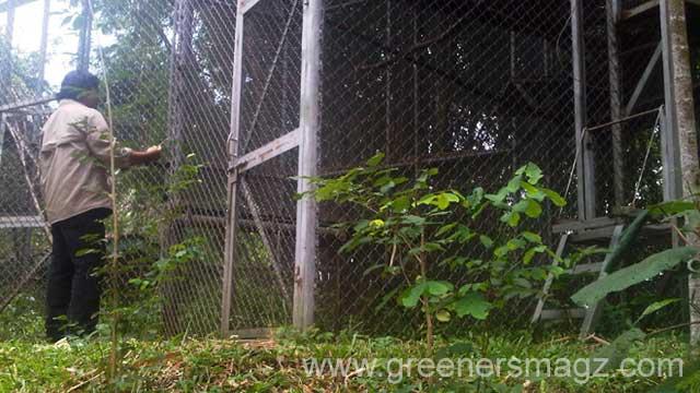 ProFauna Selamatkan Dua Ekor Macaca Fascicularis dari Pemburu Liar