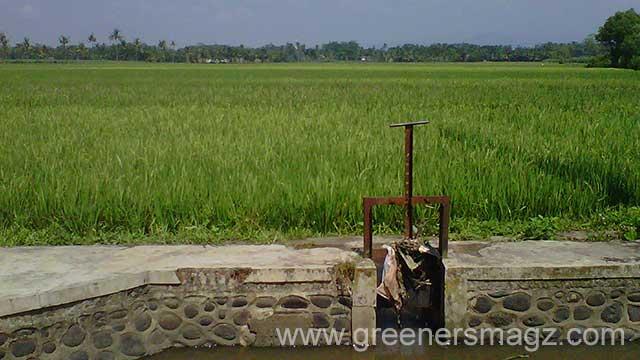 Untuk Ketahanan Pangan, Pemkab Malang Pertahankan Lahan Pertanian 45 Ribu Hektare