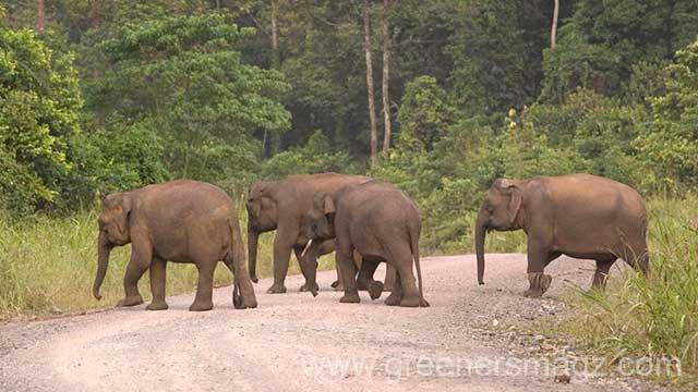 (c) WWF - Cede PRUDENTE