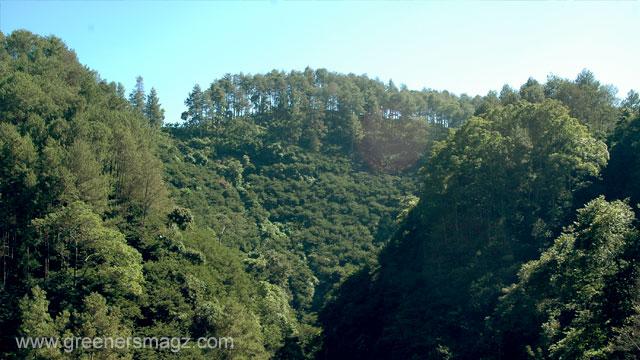 moratorium-hutan