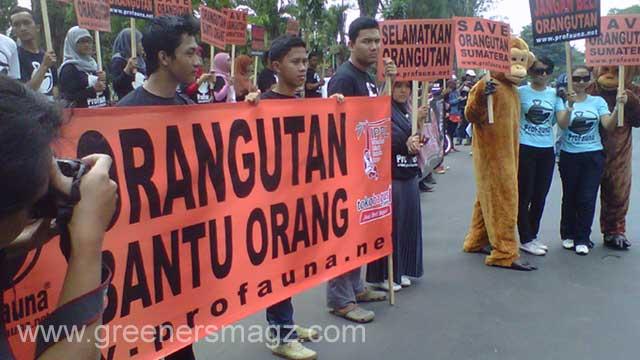 ProFauna Kampanye Perlindungan Orangutan di Enam Propinsi