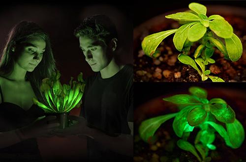 Foto: bioglowtech.com