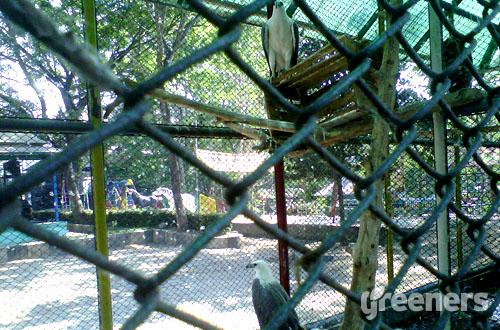 Di Tareko Malang, beberapa jenis satwa menempati kandang yang tidak sesuai dengan karakter satwa.  Foto: greeners.co