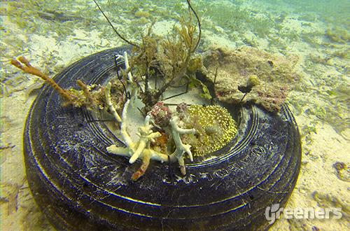 Salah satu bentuk transplantasi karang yang dibuat dalam acara Coral Day. Foto: dok. Telapak