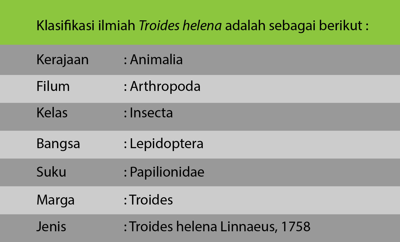 Klasifikasi ilmiah Troides helena