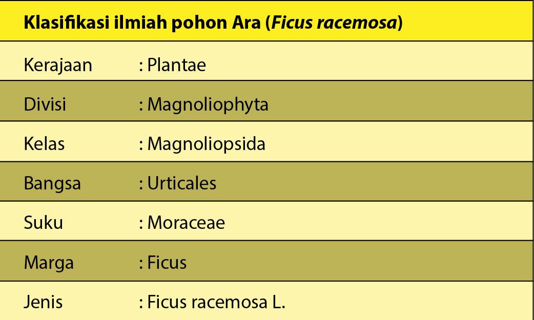 Klasifikasi-ilmiah-pohon-ara-01