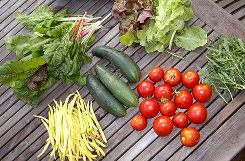 "Beberapa jenis syuran yang dapat dihasilkan dari ""home farming"". Foto: pixabay.com"