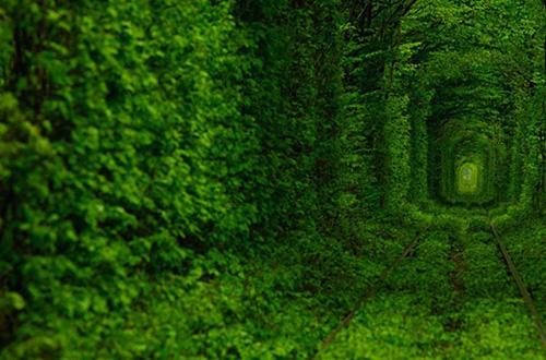 Tunnel of Love atau terowongan cinta di Ukraina. Foto: Oleg Gordienko/inhabitat.com