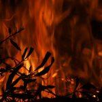 musim krusial kebakaran