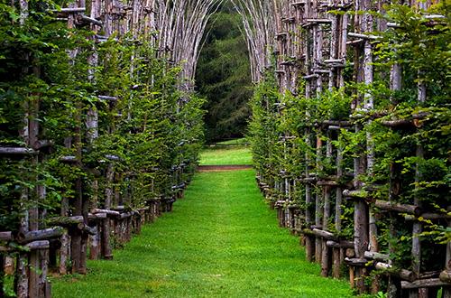 cattedrale vegetale