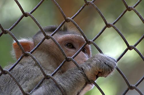 hari primata