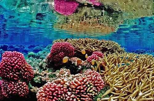 terumbu karang dunia