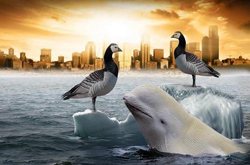 hewan migrasi