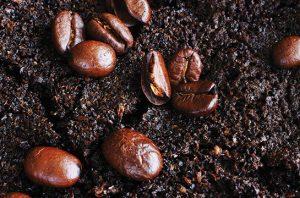 manfaat ampas kopi