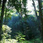 biodiversity parks