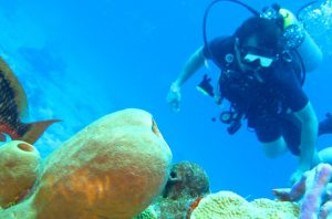 konservasi laut