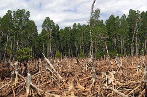 moratorium hutan
