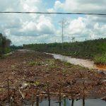 global peatland initiatives