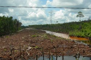 global peatland initiatives