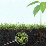 mikroba tanah