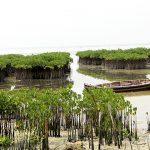 kebun raya mangrove