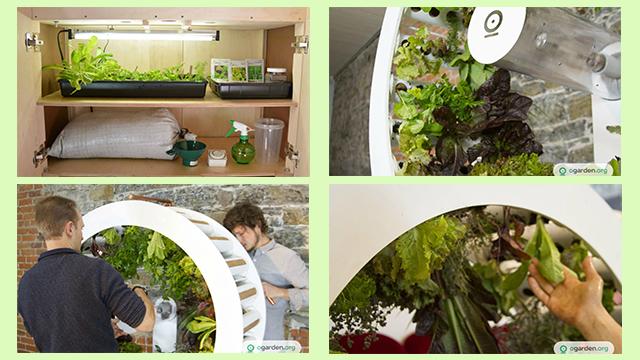 kebun indoor