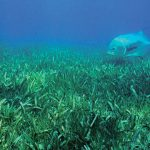 seagrass coverage