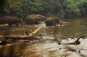 konservasi gajah