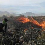 kebakaran hutan
