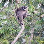 gede pangrango national park