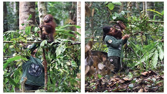 pusat penelitian orangutan