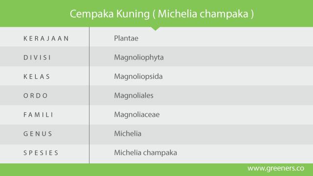 michelia champaka