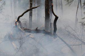siaga darurat bencana asap