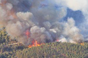 potensi kebakaran hutan