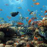 konservasi terumbu karang