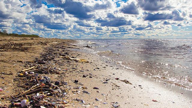 sampah mikroplastik