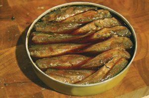 ikan makarel