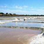 ladang garam